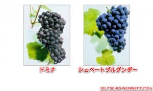 フランケンの黒ブドウ